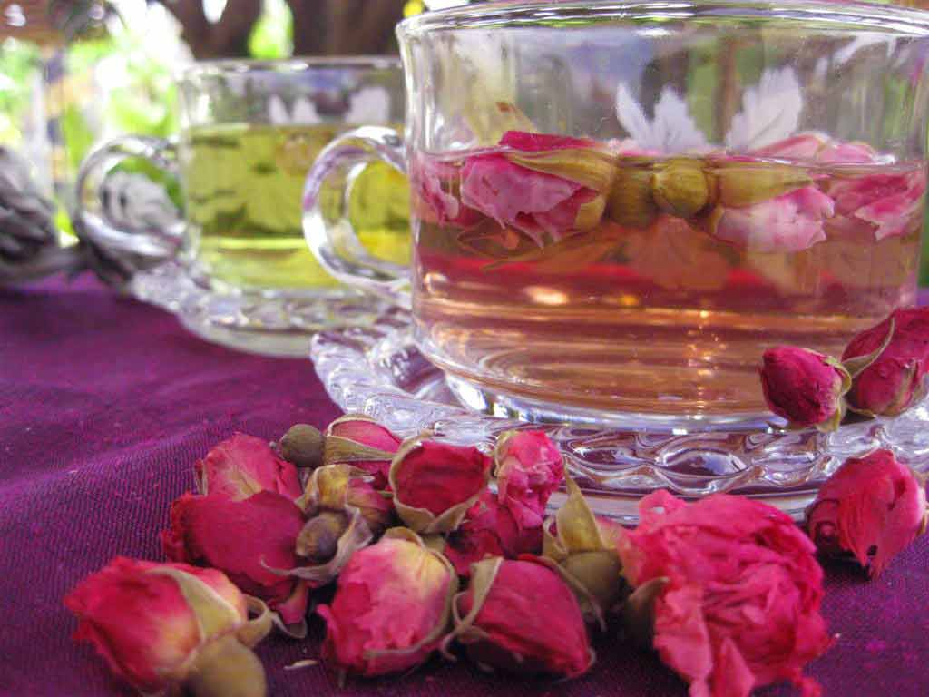 Rose Buds Are a Girl's Best Friend